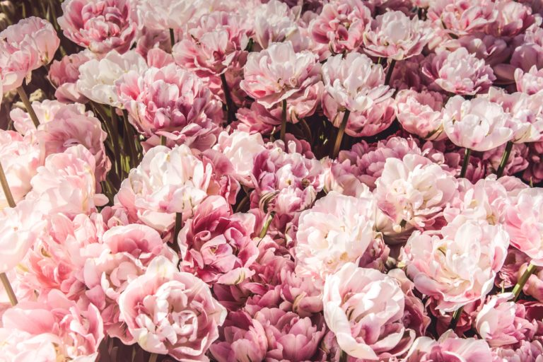 The flower market in China: a big potential