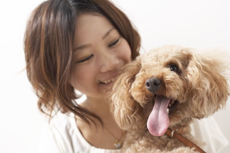 In China the Pet Economy Brings a lot of Business Opportunities for International Brands